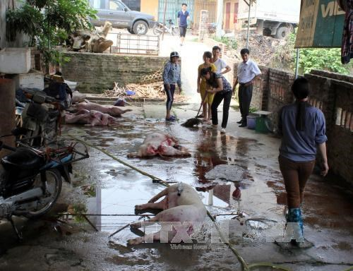 HCM City to clear out substandard slaughterhouses