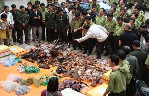 Civil society groups call for zero tolerance of wildlife crime, environmental news, sci-tech news, vietnamnet bridge, english news, Vietnam news, news Vietnam, vietnamnet news, Vietnam net news, Vietnam latest news, Vietnam breaking news, vn news