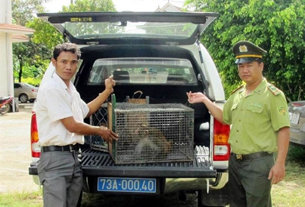 Hard battle, wildlife crime, Vietnam economy, Vietnamnet bridge, English news about Vietnam, Vietnam news, news about Vietnam, English news, Vietnamnet news, latest news on Vietnam, Vietnam
