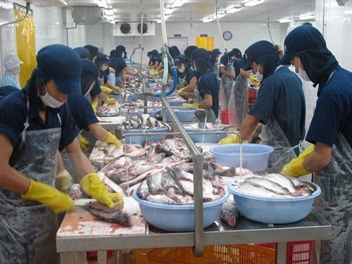 Export Seafood Quality Not Affected By Mass Fish Deaths
