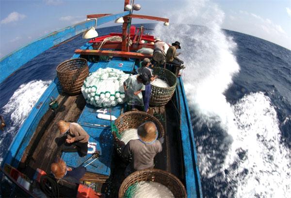 Coral reefs, East Sea, ecological balance, Vietnam economy, Vietnamnet bridge, English news about Vietnam, Vietnam news, news about Vietnam, English news, Vietnamnet news, latest news on Vietnam, Vietnam