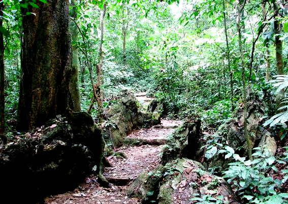 Eight forests suitable for nature enthusiasts in Vietnam, cuc phuong, nam cat tien, york don, u minh ha, travel news, Vietnam guide, Vietnam airlines, Vietnam tour, tour Vietnam, Hanoi, ho chi minh city, Saigon, travelling to Vietnam, Vietnam travelling