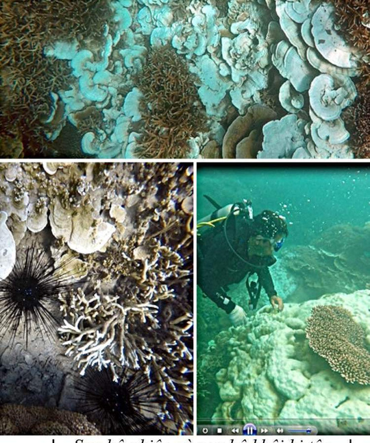 Con Dao coral bleached by high sea temperatures, environmental news, sci-tech news, vietnamnet bridge, english news, Vietnam news, news Vietnam, vietnamnet news, Vietnam net news, Vietnam latest news, Vietnam breaking news, vn news