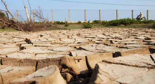 Mekong Delta drought losses total $215m, social news, vietnamnet bridge, english news, Vietnam news, news Vietnam, vietnamnet news, Vietnam net news, Vietnam latest news, vn news, Vietnam breaking news