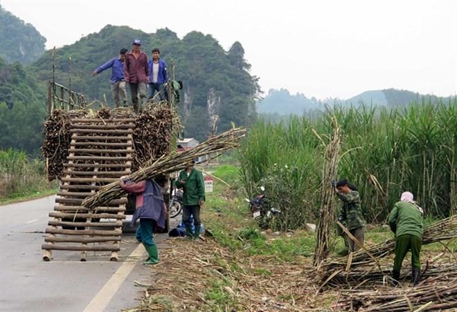 vietnam sugar market Vietnam food sweetener market analyses regional market share, major players, investment opportunities, current market scenario, forecast to 2022.