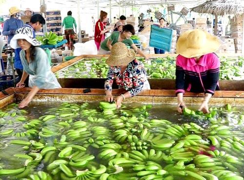 HCM City, Mekong Delta invite investors for 69 key projects, vietnam economy, business news, vn news, vietnamnet bridge, english news, Vietnam news, news Vietnam, vietnamnet news, vn news, Vietnam net news, Vietnam latest news, Vietnam breaking news