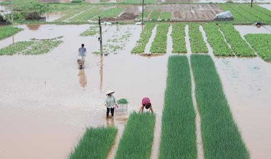 vietnamnet bridge, english news, Vietnam news, news Vietnam, vietnamnet news, MARD, Mekong Delta, agricultural production, , Vietnam net news, Vietnam latest news, vn news, Vietnam breaking news,