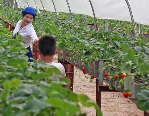 Japan eyes TPP investment in VN agriculture, vietnam economy, business news, vn news, vietnamnet bridge, english news, Vietnam news, news Vietnam, vietnamnet news, vn news, Vietnam net news, Vietnam latest news, Vietnam breaking news