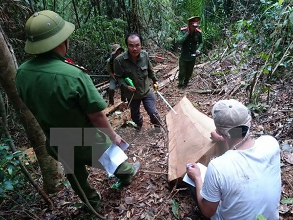 Police hunt, illegal loggers, investigation, Vietnam economy, Vietnamnet bridge, English news about Vietnam, Vietnam news, news about Vietnam, English news, Vietnamnet news, latest news on Vietnam, Vietnam