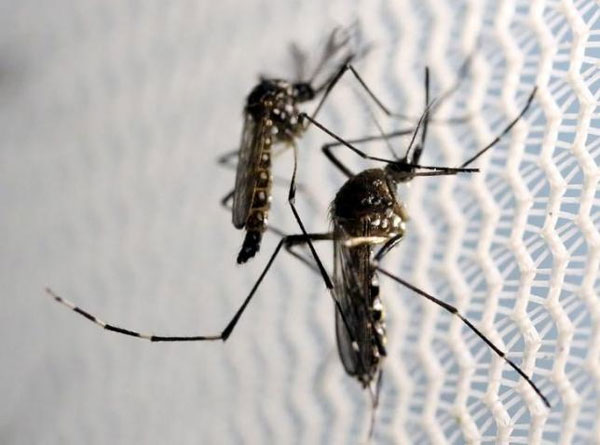 Limiting travel, controlling mosquitoes reduces Zika risk