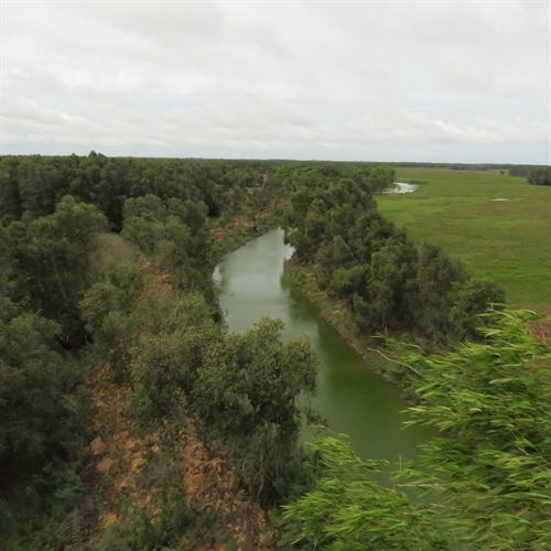 Rains provide relief to Mekong Delta's parched wetlands, tram chim, dong thap, long an, environmental news, sci-tech news, vietnamnet bridge, english news, Vietnam news, news Vietnam, vietnamnet news, Vietnam net news, Vietnam latest news, Vietnam