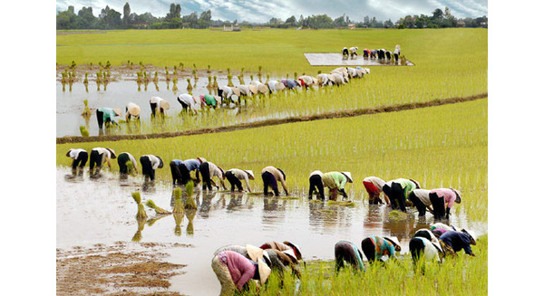 Agriculture abandoned by Vietnamese entrepreneurs