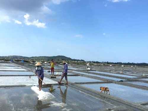 A major salt farm on central coast