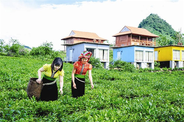 Moc Chau Plateau, homestay service, Vietnam economy, Vietnamnet bridge, English news about Vietnam, Vietnam news, news about Vietnam, English news, Vietnamnet news, latest news on Vietnam, Vietnam