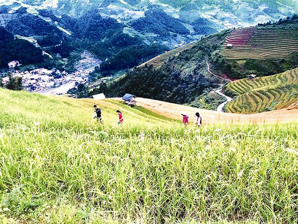 Ha Giang, terraced paddy fields, buckwheat flowers, Vietnam economy, Vietnamnet bridge, English news about Vietnam, Vietnam news, news about Vietnam, English news, Vietnamnet news, latest news on Vietnam, Vietnam