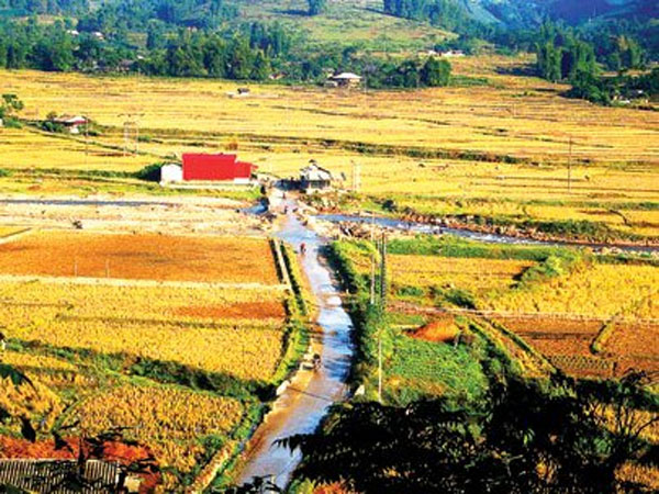 Ha Giang, terraced paddy fields, buckwheat flowers, Vietnam economy, Vietnamnet bridge, English news about Vietnam, Vietnam news, news about Vietnam, English news, Vietnamnet news, latest news on Vietnam, Vietnam