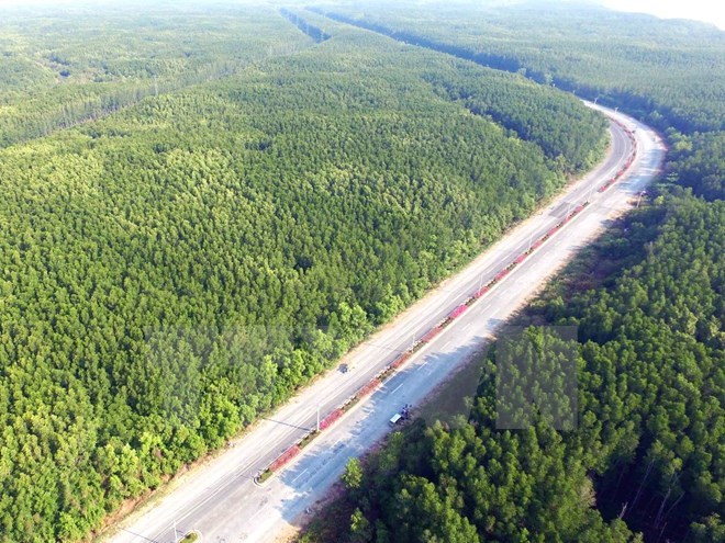 Vietnam has over 14 million hectares of forest: ministry, environmental news, sci-tech news, vietnamnet bridge, english news, Vietnam news, news Vietnam, vietnamnet news, Vietnam net news, Vietnam latest news, Vietnam breaking news, vn news