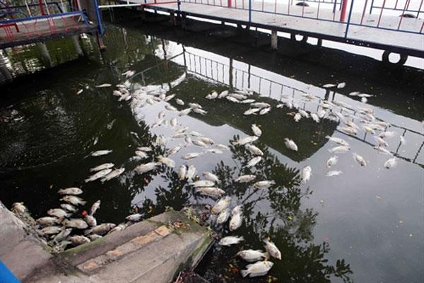 Central city, investigate fish deaths, drainage system, Vietnam economy, Vietnamnet bridge, English news about Vietnam, Vietnam news, news about Vietnam, English news, Vietnamnet news, latest news on Vietnam, Vietnam