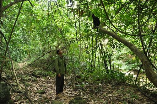 Cuc Phuong National Park, natural disasters, illegal logging, Vietnam economy, Vietnamnet bridge, English news about Vietnam, Vietnam news, news about Vietnam, English news, Vietnamnet news, latest news on Vietnam, Vietnam