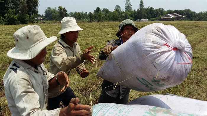Vietnam's rice exports at a standstill