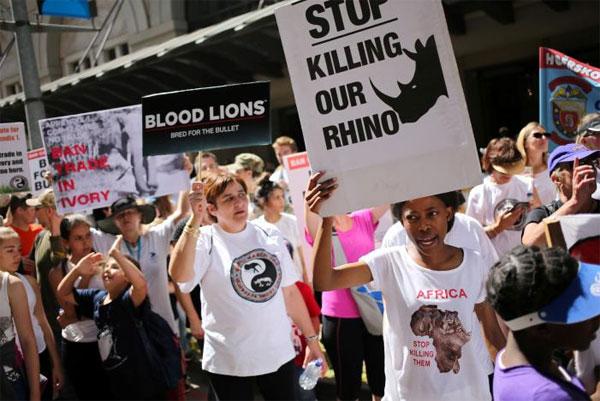 Swaziland's rhino horn sale bid seen doomed at U.N. meeting on wildlife trade