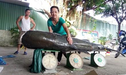 Dak Lak fishermen catch giant 130kg catfish on Serepok River, environmental news, sci-tech news, vietnamnet bridge, english news, Vietnam news, news Vietnam, vietnamnet news, Vietnam net news, Vietnam latest news, Vietnam breaking news, vn news