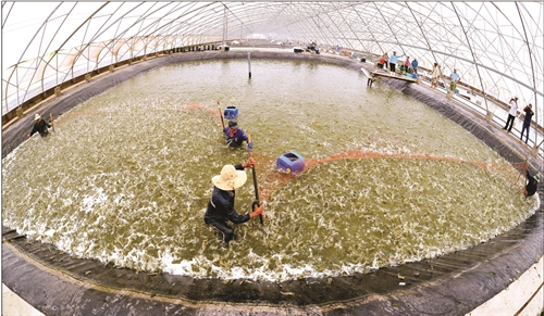 ietnamnet bridge, english news, Vietnam news, news Vietnam, vietnamnet news, Vietnam net news, Vietnam latest news, vn news, Vietnam breaking news, shrimp hatchery, environment pollution, VASEP