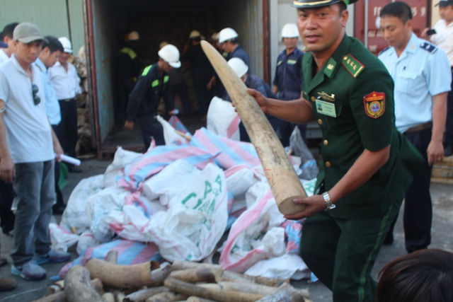 Vietnam to destroy tonnes of ivory and rhino horn, social news, vietnamnet bridge, english news, Vietnam news, news Vietnam, vietnamnet news, Vietnam net news, Vietnam latest news, vn news, Vietnam breaking news