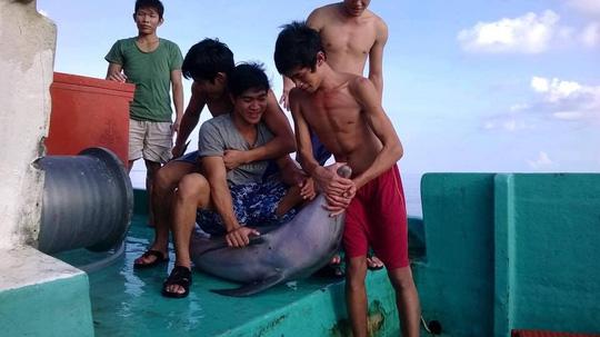 Phu Quoc Police search for dolphin killers, environmental news, sci-tech news, vietnamnet bridge, english news, Vietnam news, news Vietnam, vietnamnet news, Vietnam net news, Vietnam latest news, Vietnam breaking news, vn news