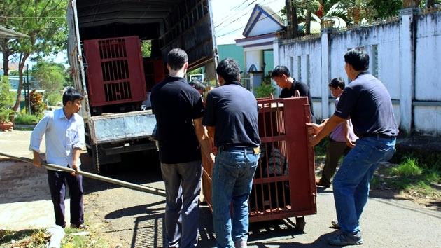 Four captive bears rescued in Gia Lai, environmental news, sci-tech news, vietnamnet bridge, english news, Vietnam news, news Vietnam, vietnamnet news, Vietnam net news, Vietnam latest news, Vietnam breaking news, vn news