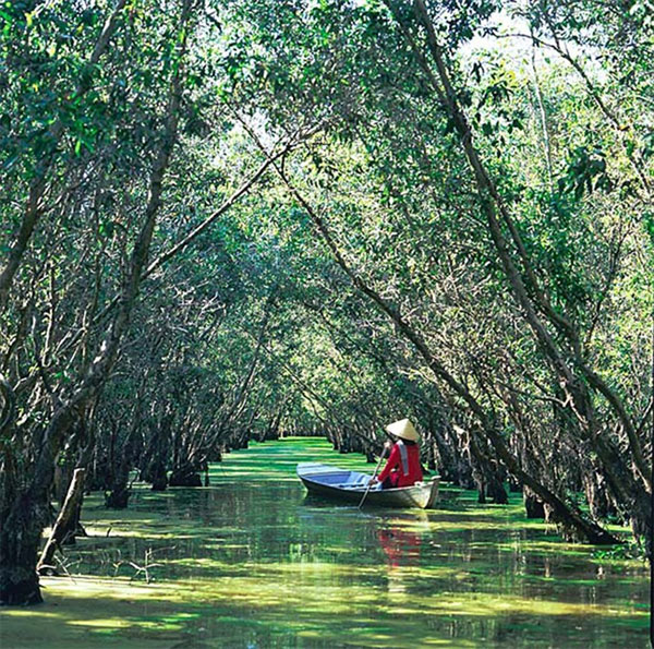 An Giang, Tra Su cajeput forest, Vietnam economy, Vietnamnet bridge, English news about Vietnam, Vietnam news, news about Vietnam, English news, Vietnamnet news, latest news on Vietnam, Vietnam