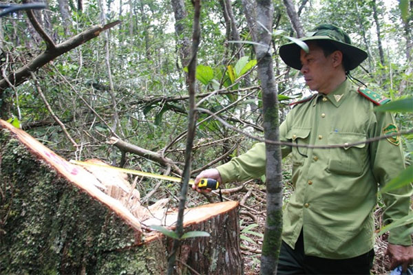 Quang Nam, officials punished, illegal logging, Vietnam economy, Vietnamnet bridge, English news about Vietnam, Vietnam news, news about Vietnam, English news, Vietnamnet news, latest news on Vietnam, Vietnam