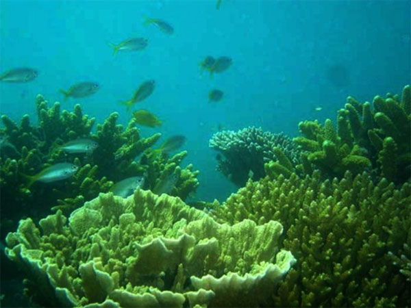 Con Dao corals, recover naturally, preventing erosion,  Vietnam economy, Vietnamnet bridge, English news about Vietnam, Vietnam news, news about Vietnam, English news, Vietnamnet news, latest news on Vietnam, Vietnam