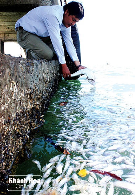 Mass fish deaths off Khanh Hoa province coast, environmental news, sci-tech news, vietnamnet bridge, english news, Vietnam news, news Vietnam, vietnamnet news, Vietnam net news, Vietnam latest news, Vietnam breaking news, vn news
