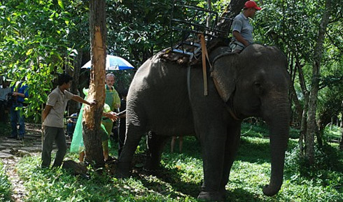 Vietnam uses ultrasound to determine virility of domestic elephants, environmental news, sci-tech news, vietnamnet bridge, english news, Vietnam news, news Vietnam, vietnamnet news, Vietnam net news, Vietnam latest news, Vietnam breaking news, vn news