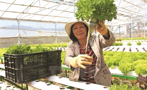 Japanese capital poured into 'intensive farming' in Vietnam - News