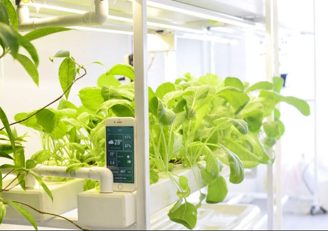 Hydroponic system app to boost harvests