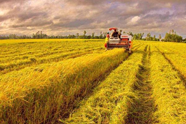 Agriculture sector, restructuring, apply advanced technology, Vietnam economy, Vietnamnet bridge, English news about Vietnam, Vietnam news, news about Vietnam, English news, Vietnamnet news, latest news on Vietnam, Vietnam