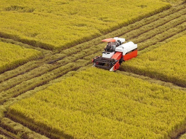 SciTech – key solution to agricultural restructuring in Vietnam,  vietnam economy, business news, vn news, vietnamnet bridge, english news, Vietnam news, news Vietnam, vietnamnet news, vn news, Vietnam net news, Vietnam latest news, Vietnam breaking news