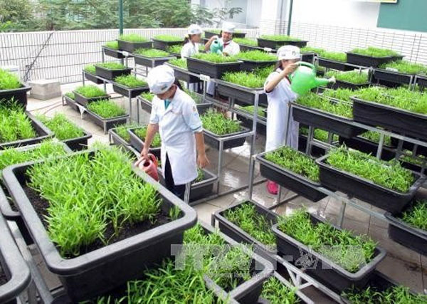 HCM City, kids, aquaponic gardens, Vietnam economy, Vietnamnet bridge, English news about Vietnam, Vietnam news, news about Vietnam, English news, Vietnamnet news, latest news on Vietnam, Vietnam