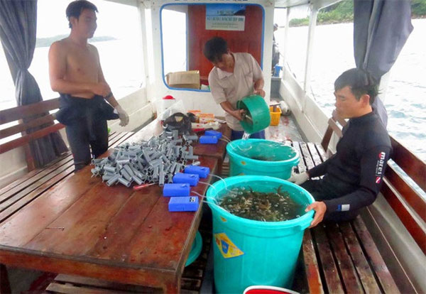 Planting forests, coral reproduction project, Phu Quoc, Vietnam economy, Vietnamnet bridge, English news about Vietnam, Vietnam news, news about Vietnam, English news, Vietnamnet news, latest news on Vietnam, Vietnam
