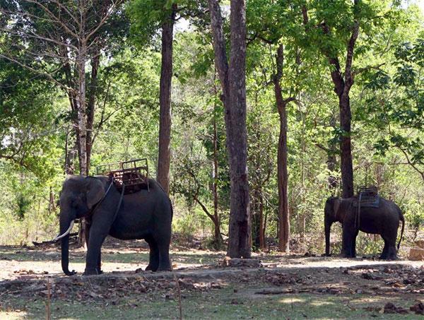 Yok Don National Park, wild elephants, Vietnam economy, Vietnamnet bridge, English news about Vietnam, Vietnam news, news about Vietnam, English news, Vietnamnet news, latest news on Vietnam, Vietnam