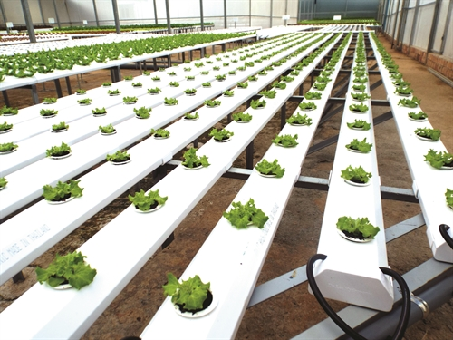 Vietnam trials hi-tech agriculture production zones