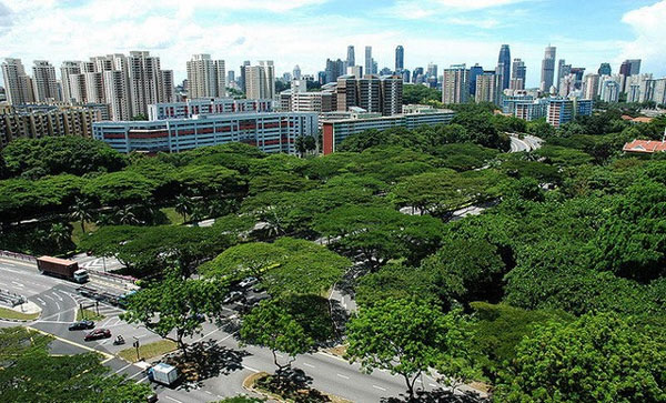 Good planning needed to create a green Ha Noi