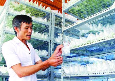 Hi-tech farmers in Da Lat, IT news, sci-tech news, vietnamnet bridge, english news, Vietnam news, news Vietnam, vietnamnet news, Vietnam net news, Vietnam latest news, Vietnam breaking news, vn news