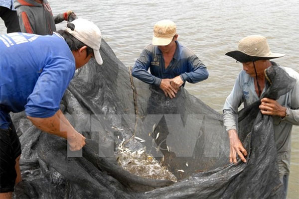 Dong Thap, aquaculture products, ODA loans, Vietnam economy, Vietnamnet bridge, English news about Vietnam, Vietnam news, news about Vietnam, English news, Vietnamnet news, latest news on Vietnam, Vietnam