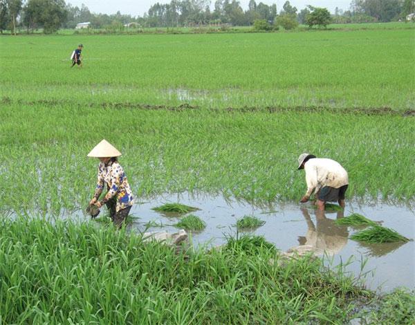 Mekong Delta, saltwater intrusion, salinity levels, crop, Vietnam economy, Vietnamnet bridge, English news about Vietnam, Vietnam news, news about Vietnam, English news, Vietnamnet news, latest news on Vietnam, Vietnam