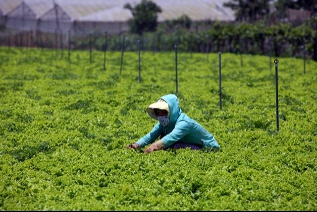 Japanese agribusinesses eye Vietnam's agriculture, vietnam economy, business news, vn news, vietnamnet bridge, english news, Vietnam news, news Vietnam, vietnamnet news, vn news, Vietnam net news, Vietnam latest news, Vietnam breaking news