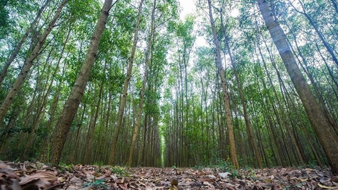 Vietnam sets goals for sustainable forestry development, environmental news, sci-tech news, vietnamnet bridge, english news, Vietnam news, news Vietnam, vietnamnet news, Vietnam net news, Vietnam latest news, Vietnam breaking news, vn news