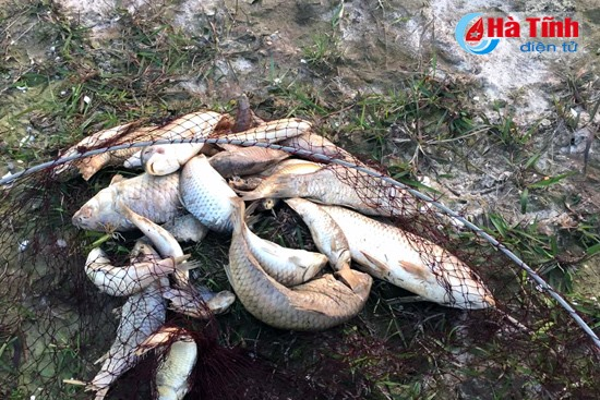 Mass fish deaths occur in Ha Tinh River, environmental news, sci-tech news, vietnamnet bridge, english news, Vietnam news, news Vietnam, vietnamnet news, Vietnam net news, Vietnam latest news, Vietnam breaking news, vn news